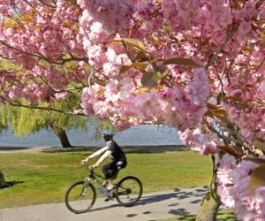 Queenstown in Spring